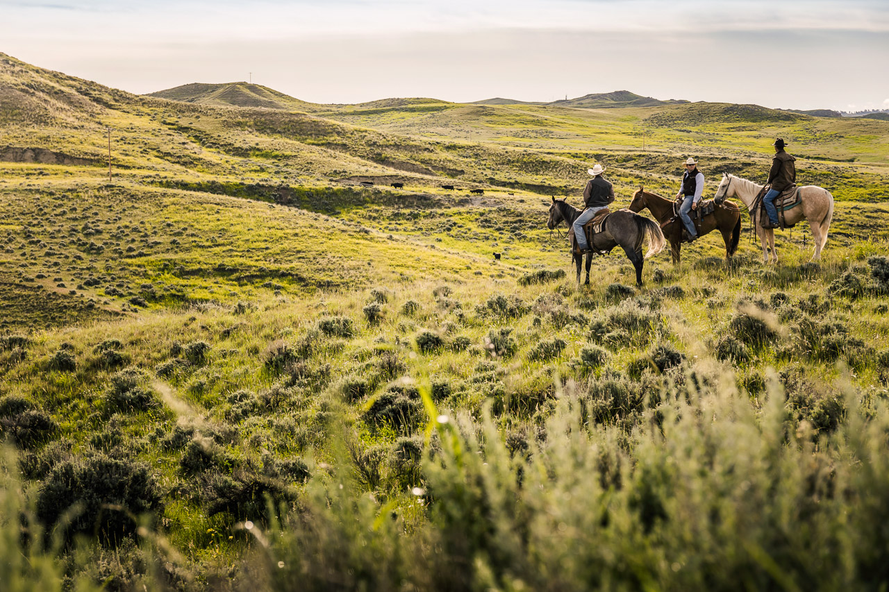 Cowboys-Wyoming-2015-0064_MG_9019
