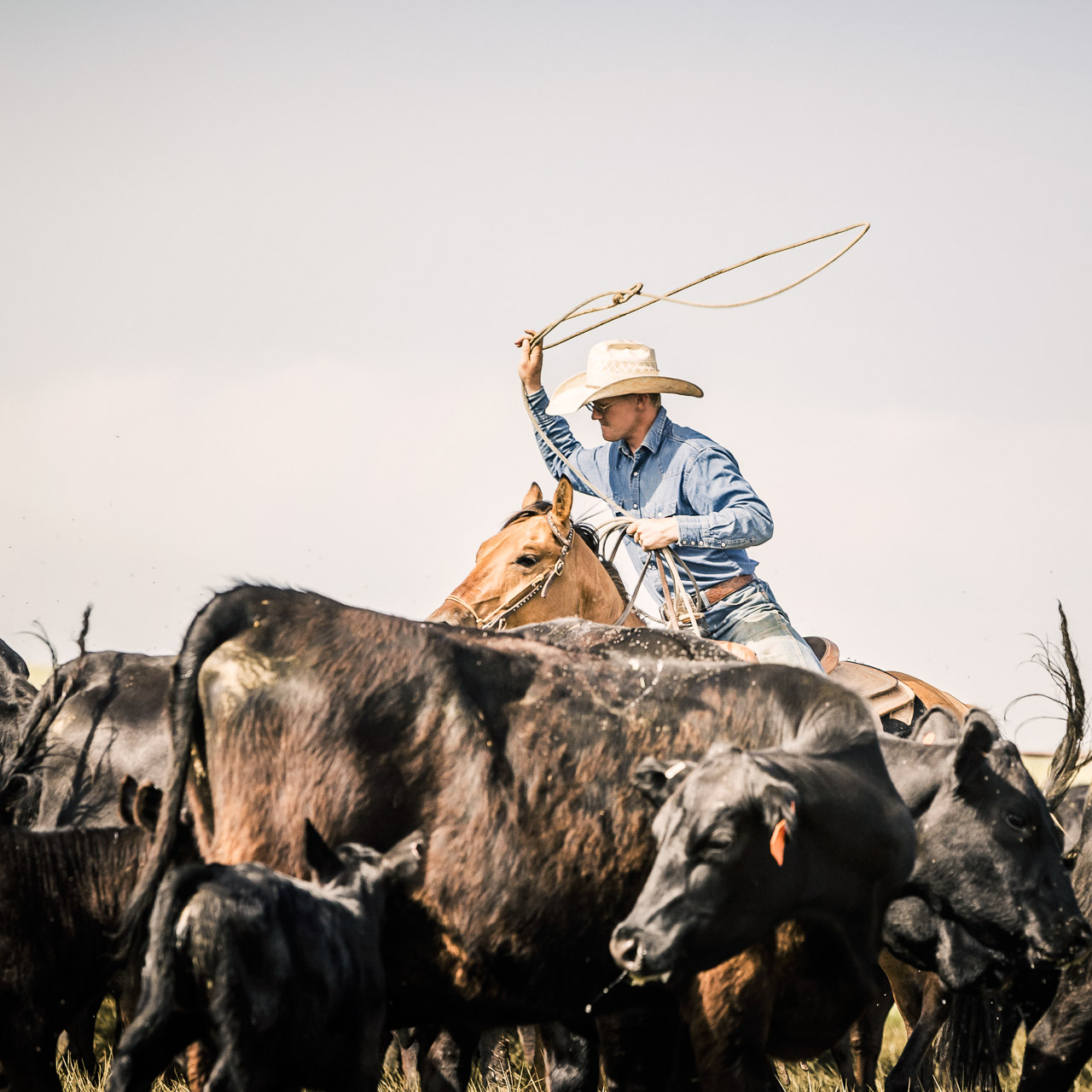 Cowboys-Wyoming-2015-0533_MG_9429