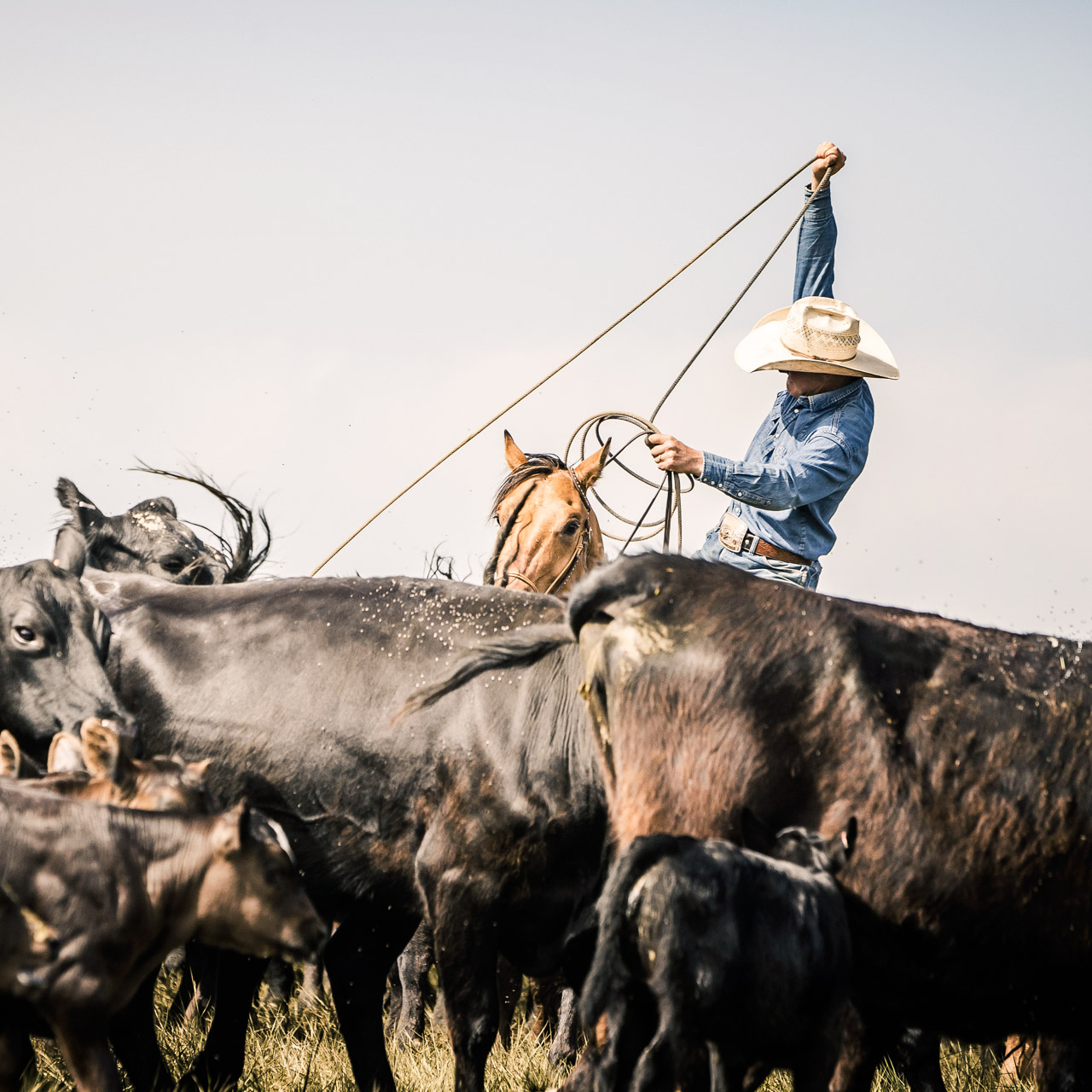 Cowboys-Wyoming-2015-0535_MG_9431
