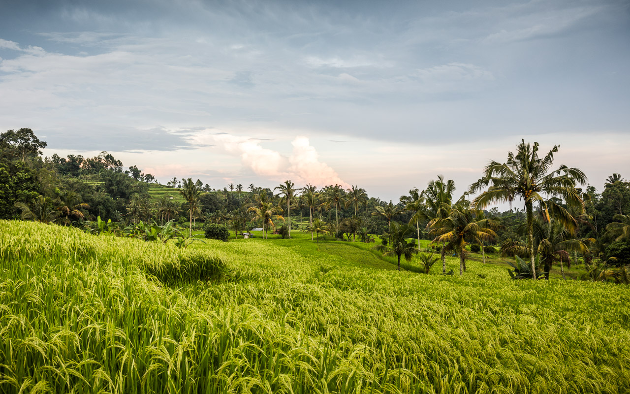 Indonesia-Bali-2016-_MG_8152