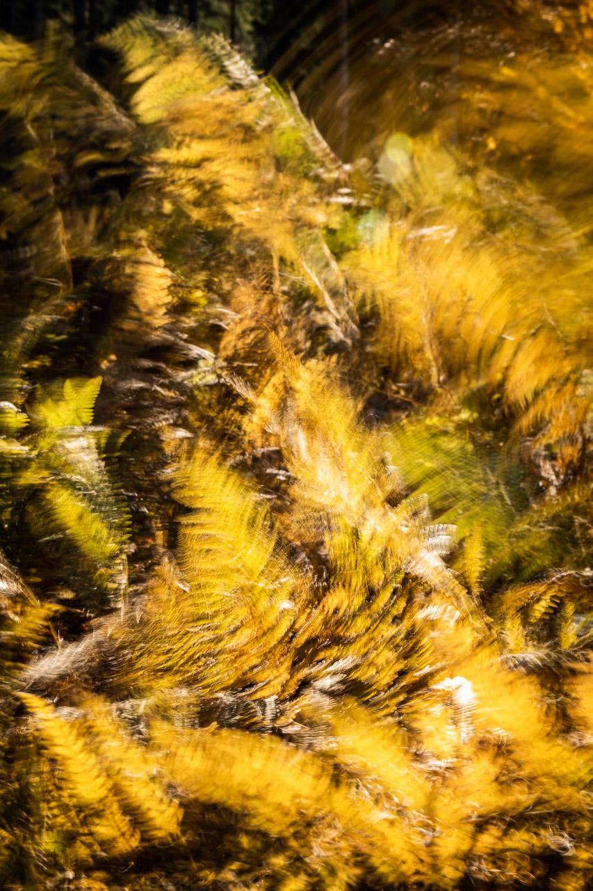 Schwarzwald-Herbst-2020-_W5A5322